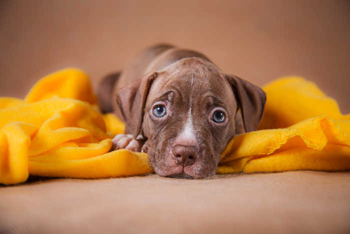 Adorable Puppy on a Blanket