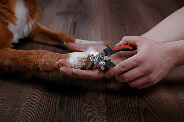 Dog's Nails Being Cut