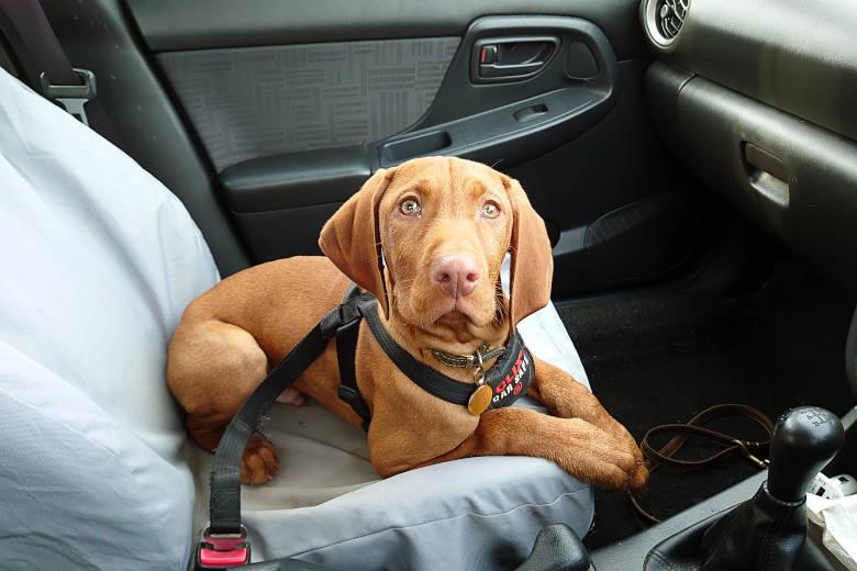 Harris in the Car