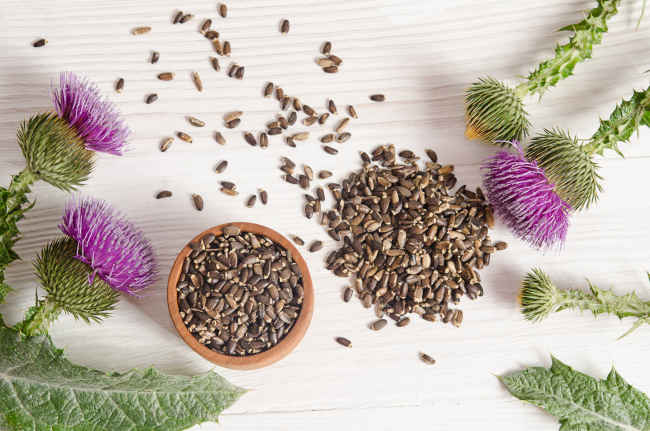 Milk Thistle Seeds and Plant