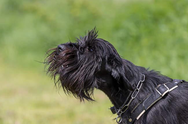 Black Dog Barking Outside