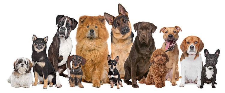 12 Different Dog Breeds