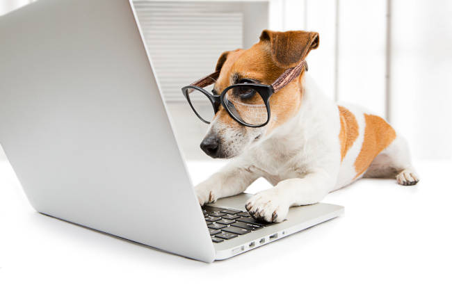 Clever Pup Using Laptop