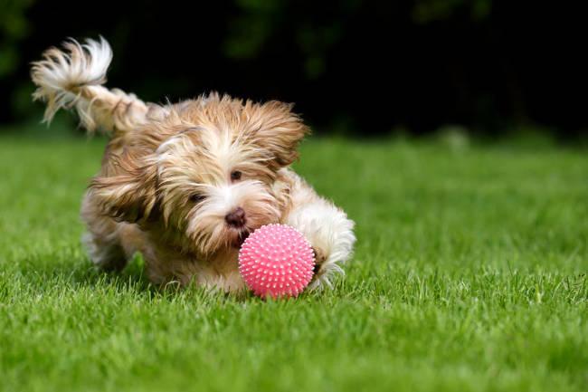 Dog Chasing Ball Outside