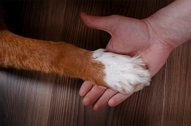 Dog's Paw in Hand