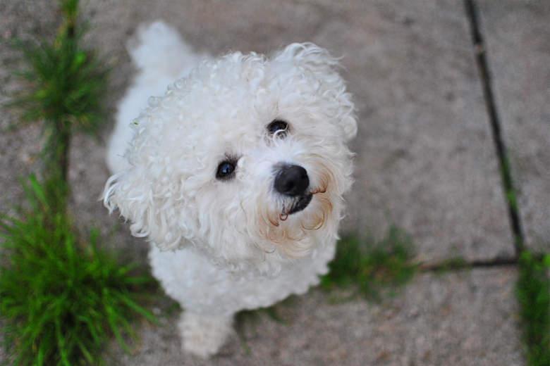Jasper The Pup